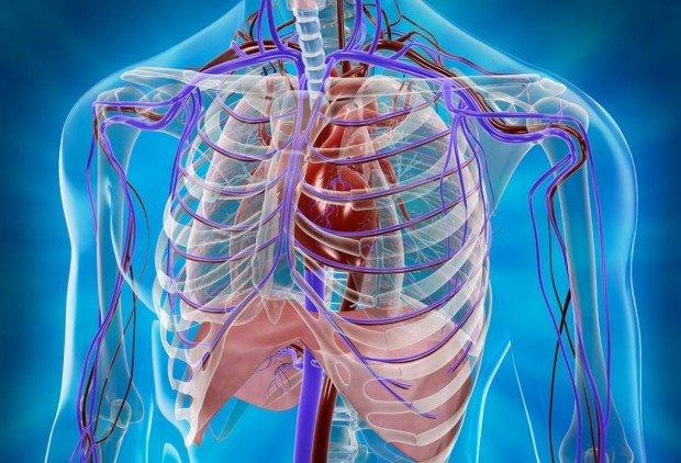 Задачи анатомии и ее связи с другими науками