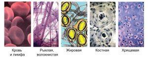 Ткани внутренней среды