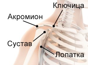 Акромиально-ключичный сустав