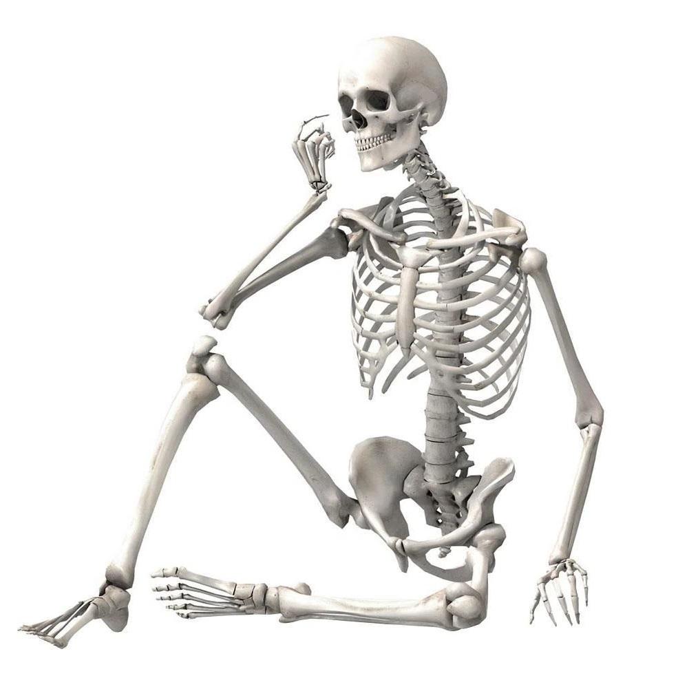 Учение о костях