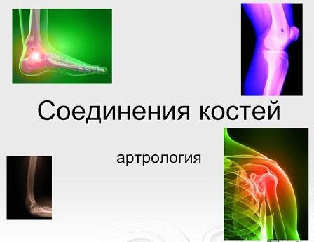 Соединение костей