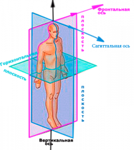 Плоскости и оси тела человека